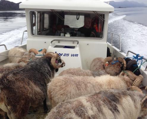 Transport med båt