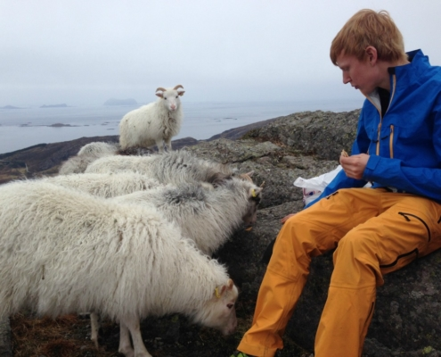 Mass-Bendik deler maten med lamma