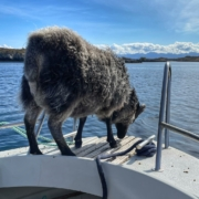 Enkelte er meir trygge på båten enn andre - reksta.no
